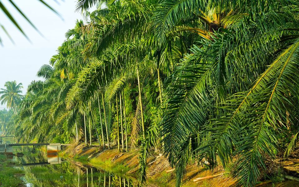 Our approach to sustainable investing in palm oil