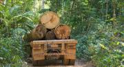 Robeco joins investor call to save rainforest
